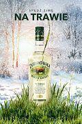 Zima na trawie z Żubrówką