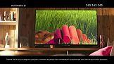 Chomiki od PZL w kampanii reklamowej Multimedia