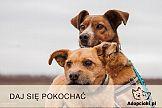 Adopciaki.pl ze wsparciem McCann & MRM