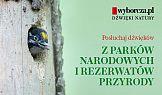 Specjalny serwis Wyborcza.pl z odgłosami natury