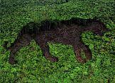 Partnerstwo dla ekologii – HP i WWF razem dla ochrony lasów