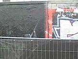 Adidas kłamie w sprawie zniszczenia graffiti na Służewcu?