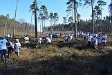 Już 30 000 drzew posadzonych z Tikkurila